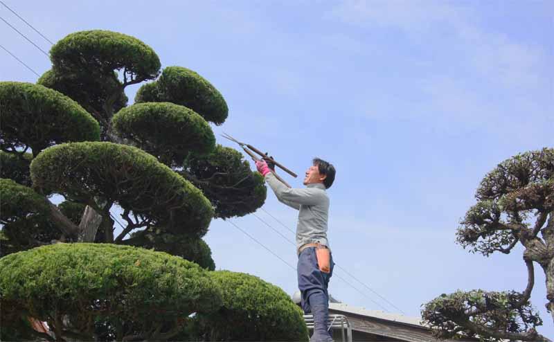 庭師の選び方|庭.pro