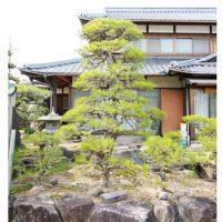 和風庭園の中心となる立派な松