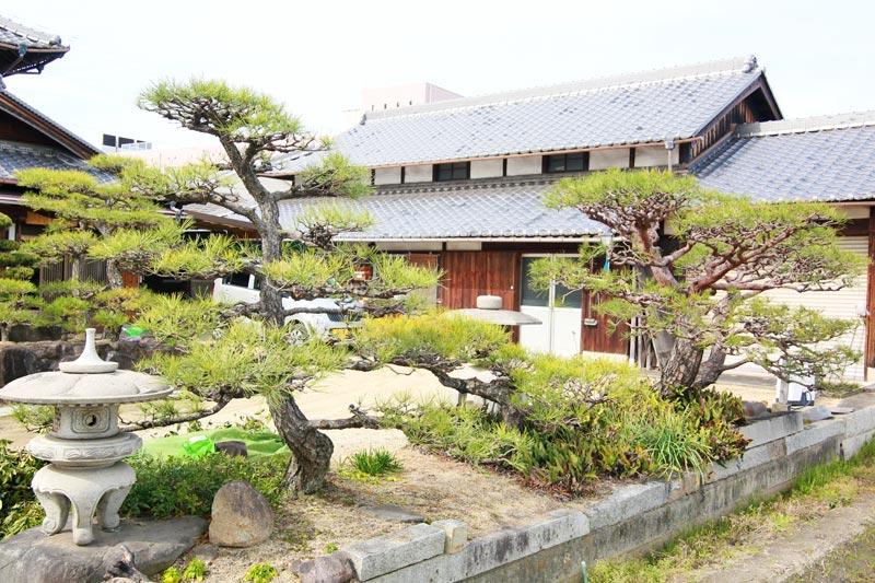 きれいに剪定された庭木