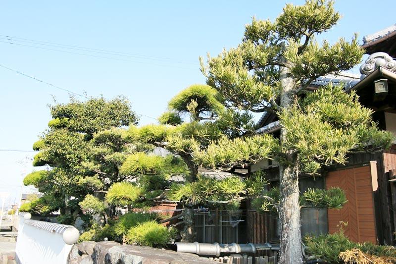 剪定される前の庭木