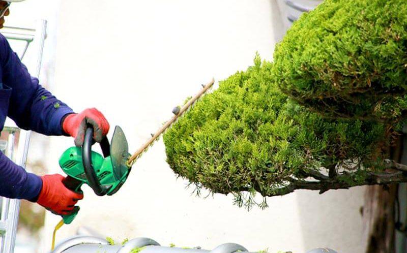 お庭の剪定に起こりがちなトラブルを回避