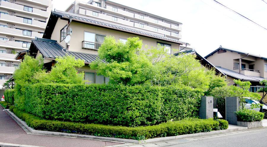 岡山の純和風庭の剪定前